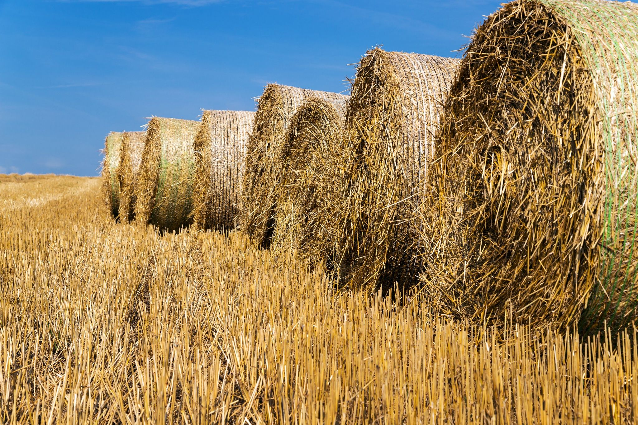 Sliced ​​straw by Bohus Marian on 500px