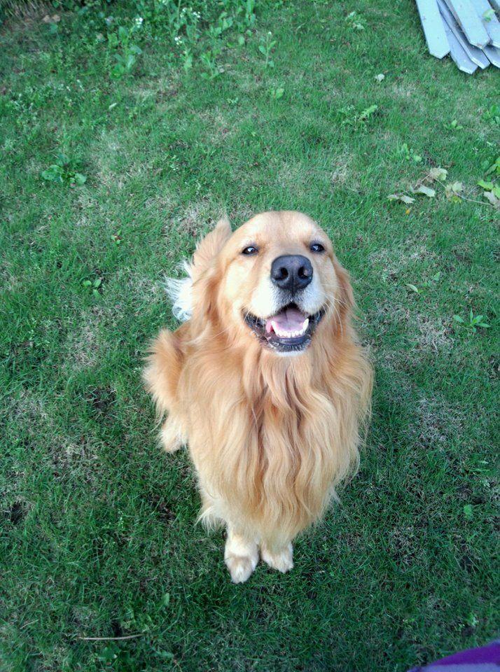 Seu dia está difícil? Não mais! Você vai se sentir beeeem melhor depois deste sorrisão! #Sorria #Cachorro #ALegria
