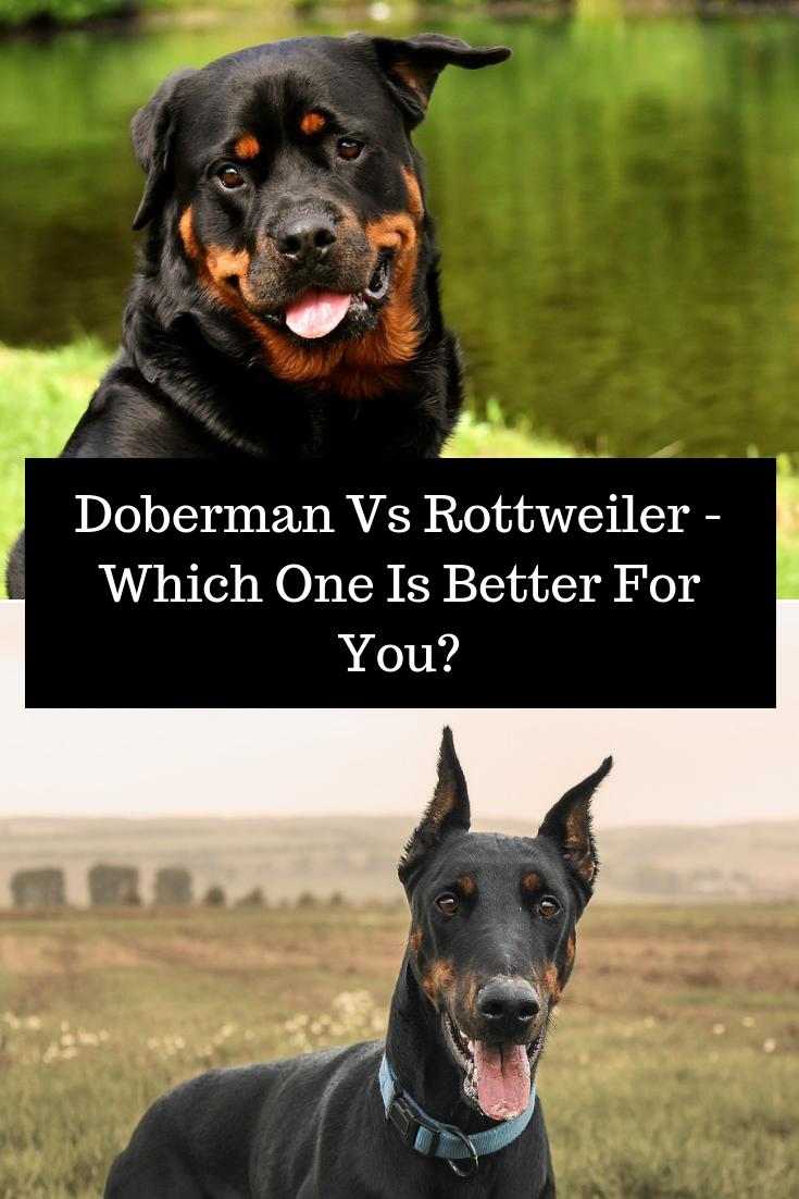 Doberman Dog Vs Rottweiler