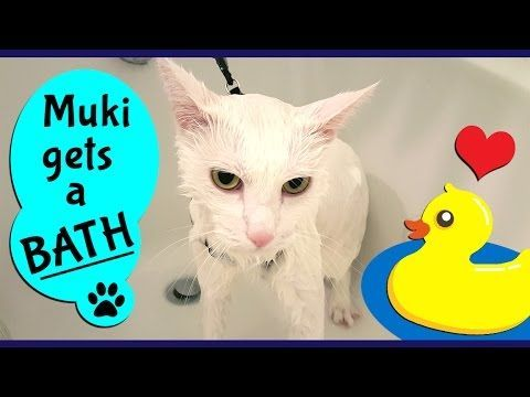 Cat Bathing Best way to give a cat a BATH without getting