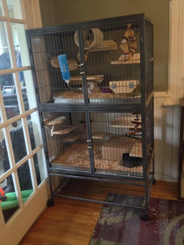 The Ferret Nation Club Page 148 Chins Hedgies Chinchilla Cage Rat Cage Diy Pet Rat Cages