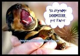 Resultado de imagen para imagenes de perritos bebes