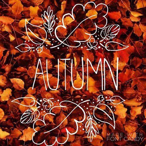 "Autumn Leaves on Instagram: ""So. Beautiful. ""   Осенние ..."