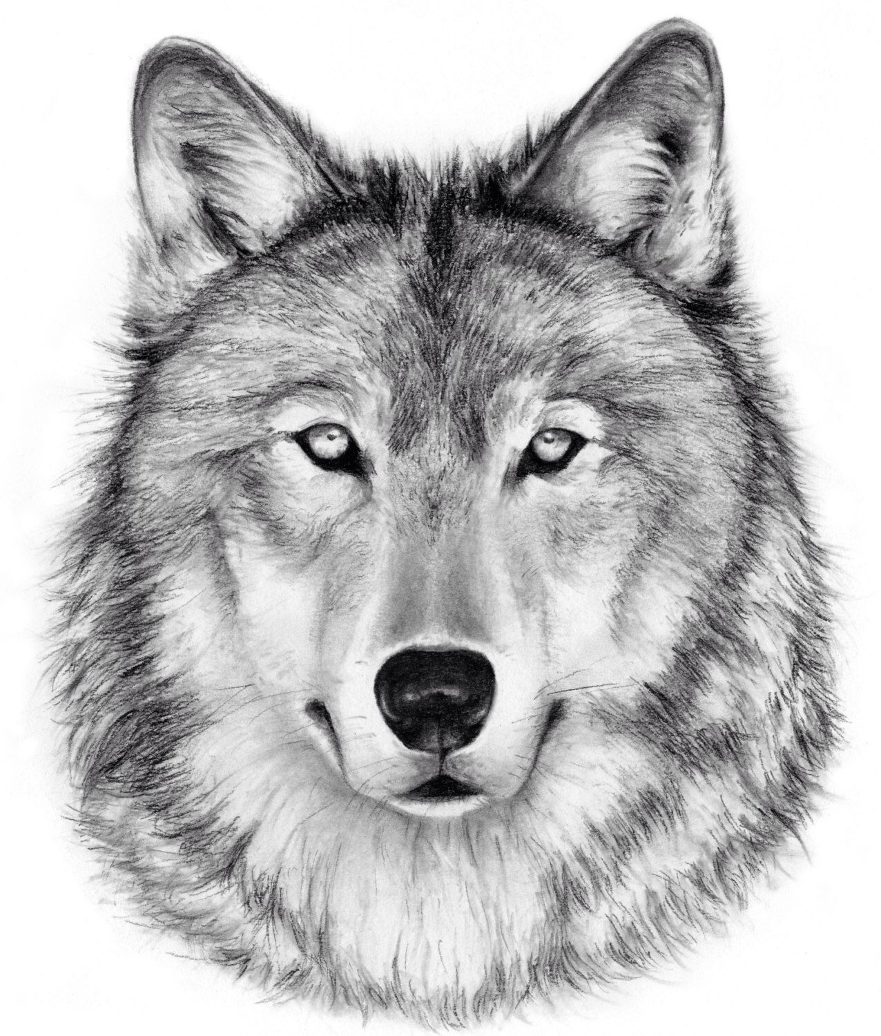 Wolf Charcoal Drawing Giclee Print