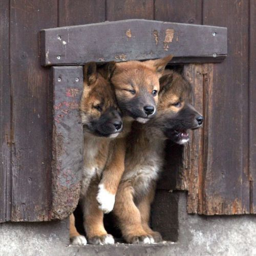 Hollenhund On Http Www Langweiledich Net Mit Bildern