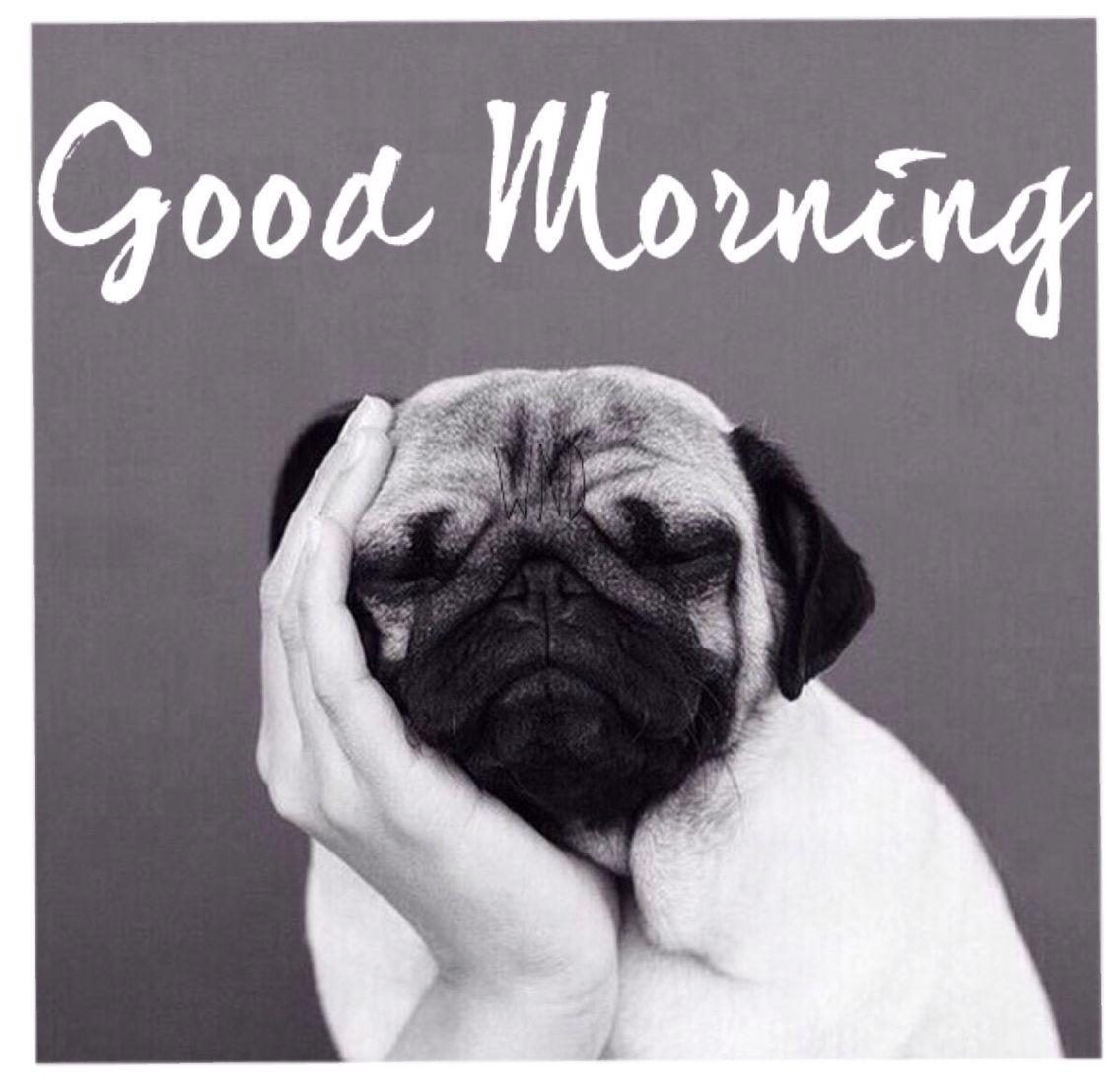 Good Morning Pug Life Cute Pugs Pugs Cute Animals