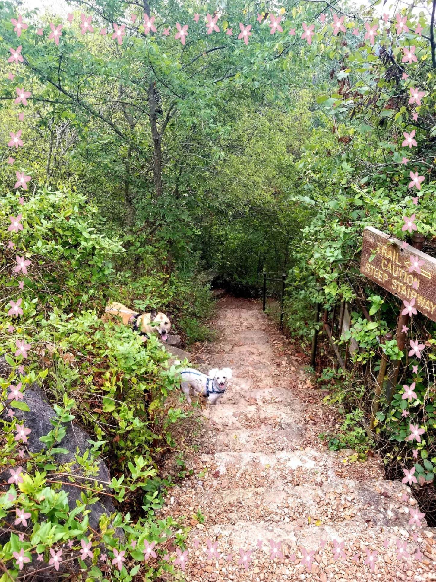 Lakeshore Forest Wilderness Branson Mo Table Rock State Park Dog Friends Picnic Area