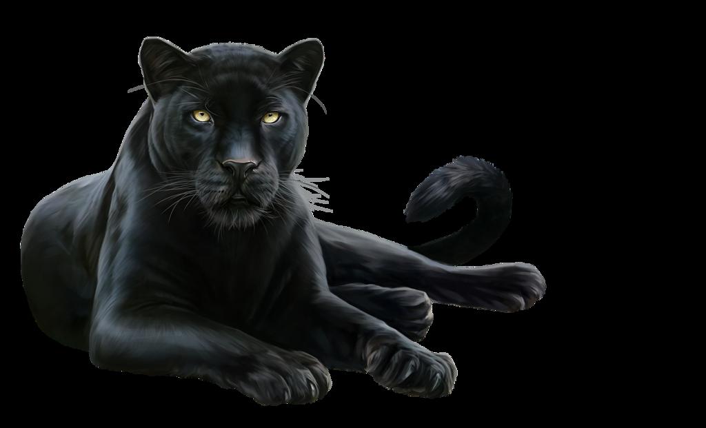Пантера черно белая картинка, картинки