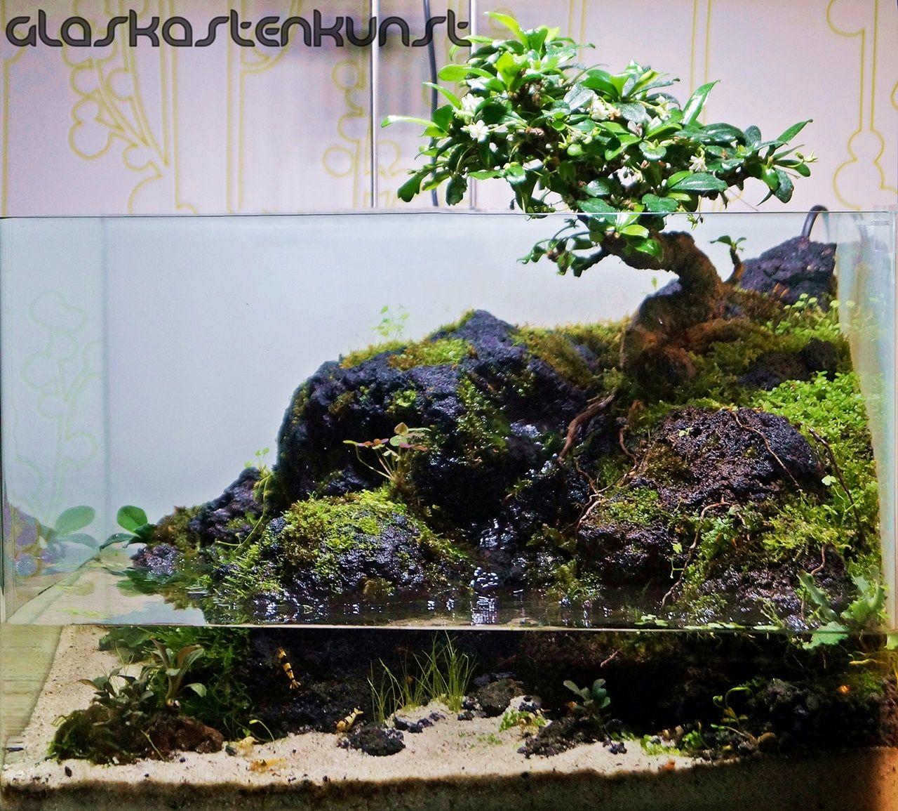 35l bonsai paludarium aquascaping world forum georgia for Fish tank tree