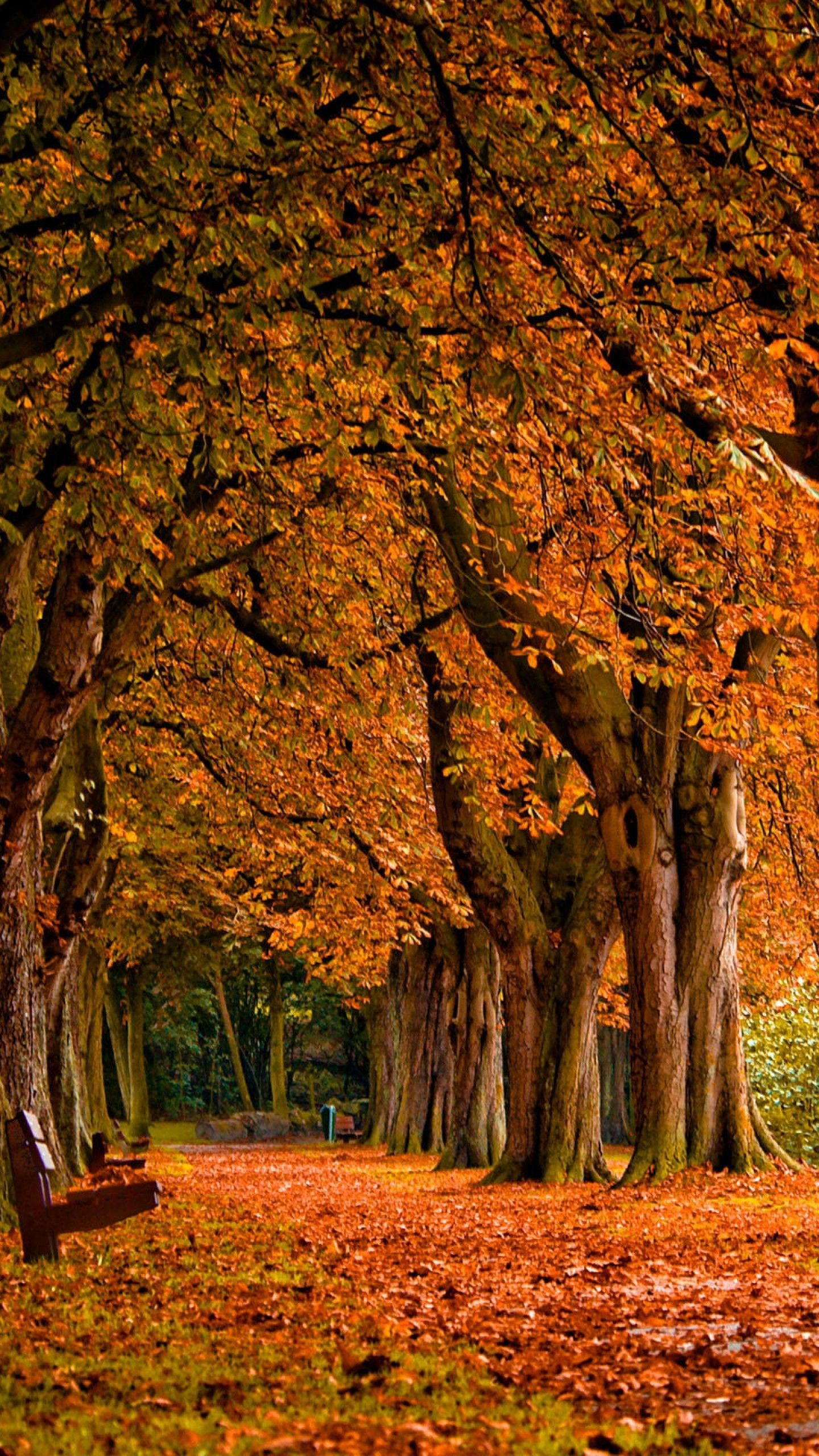 Autumn Wallpaper Android Apps on Google Play HD