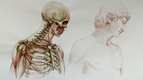 Human Anatomy For Figurative Artists Video Course Anatomy