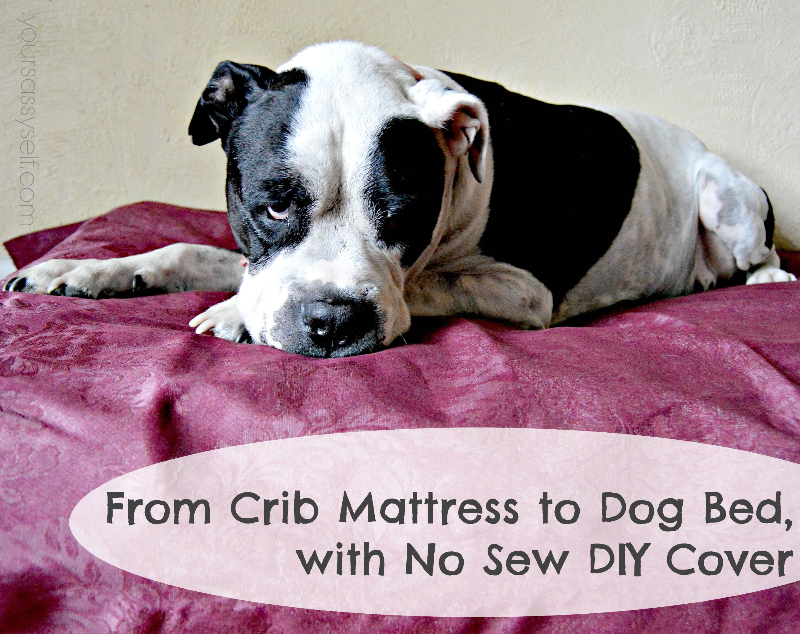 From Crib Mattress to Dog Bed, with No Sew DIY Cover Diy