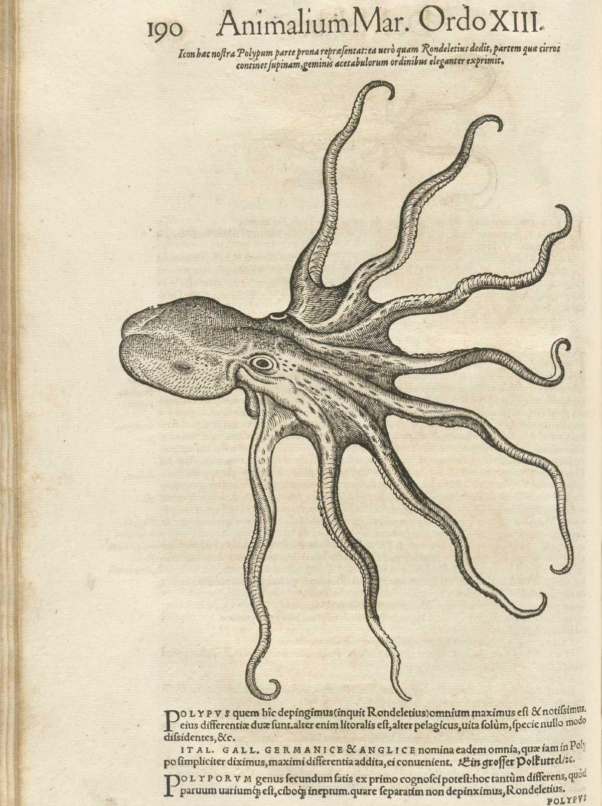 Conrad Gesner\'s Historiae Animalium. | Bestiary | Pinterest ...