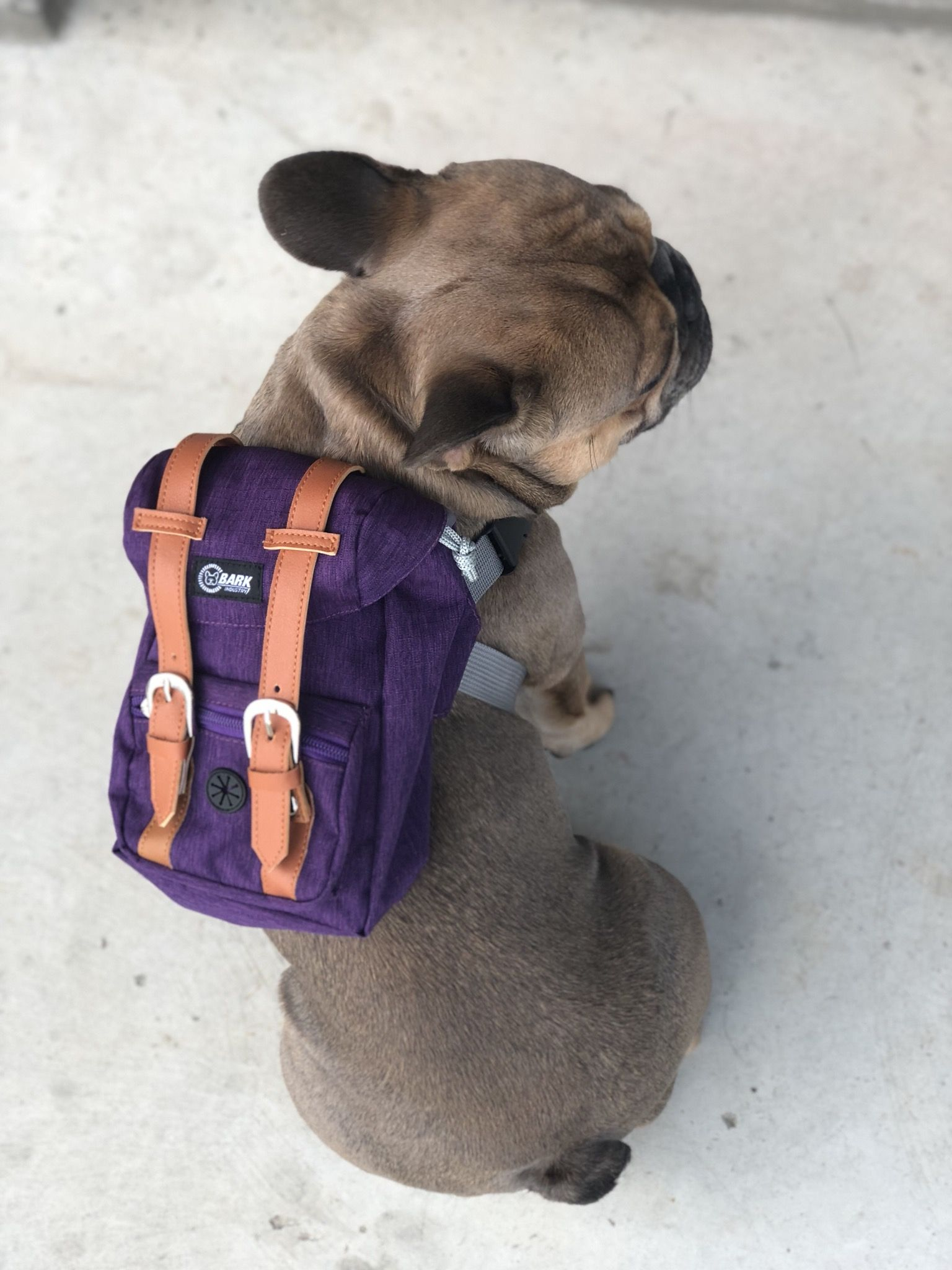 8c90e577df0 Limited edition bark industry sexy purple backpack