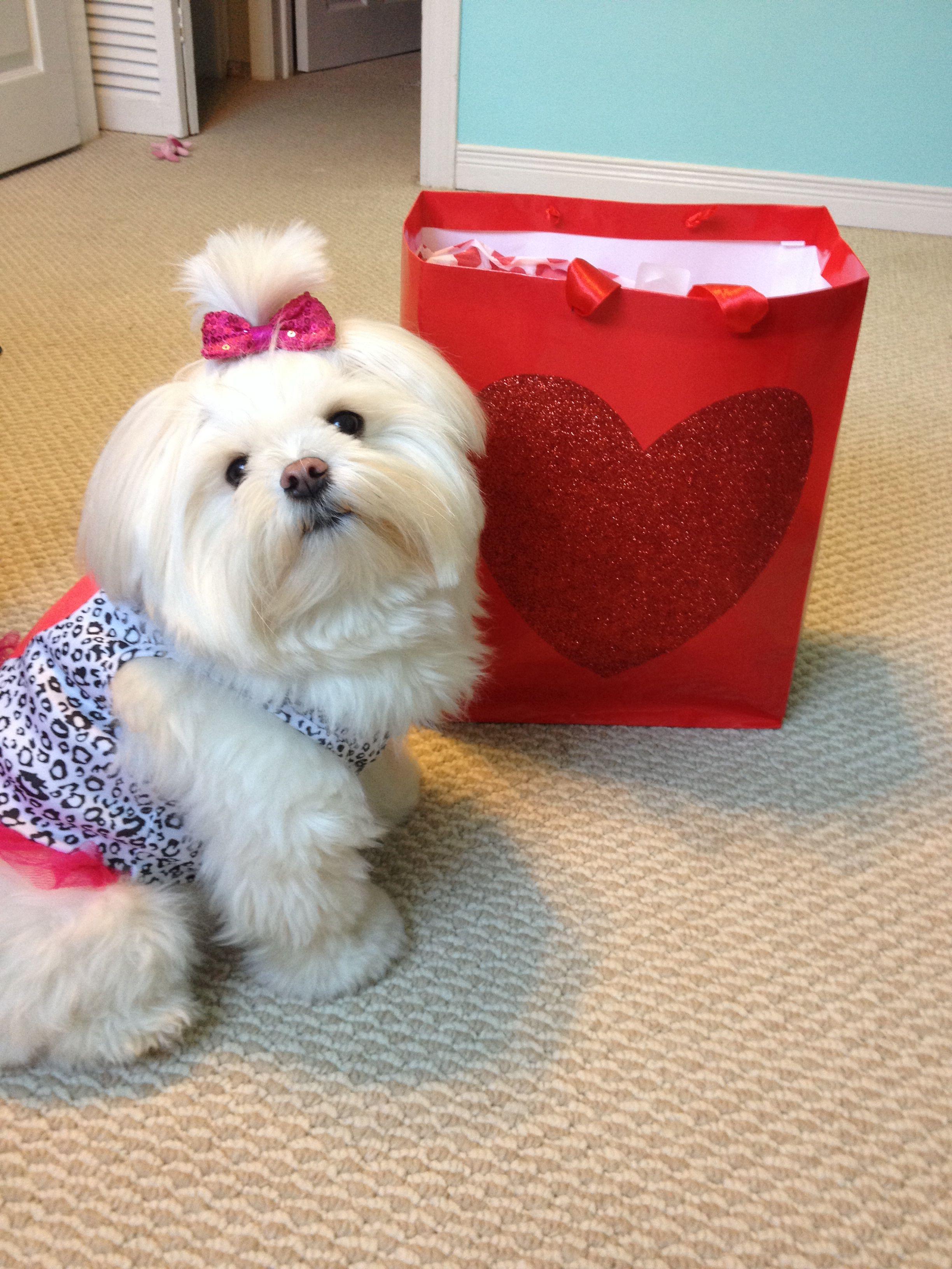 Valentine's Day puppy <3