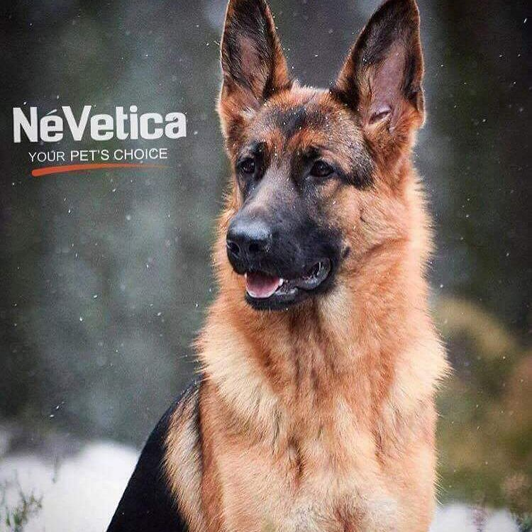 Animal Jobs Near Me Pets, Dog lovers, German shepherd