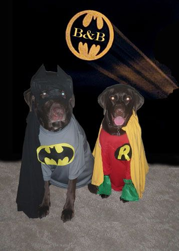 Dog Halloween Costume Contest Batman And Robin Dog Halloween