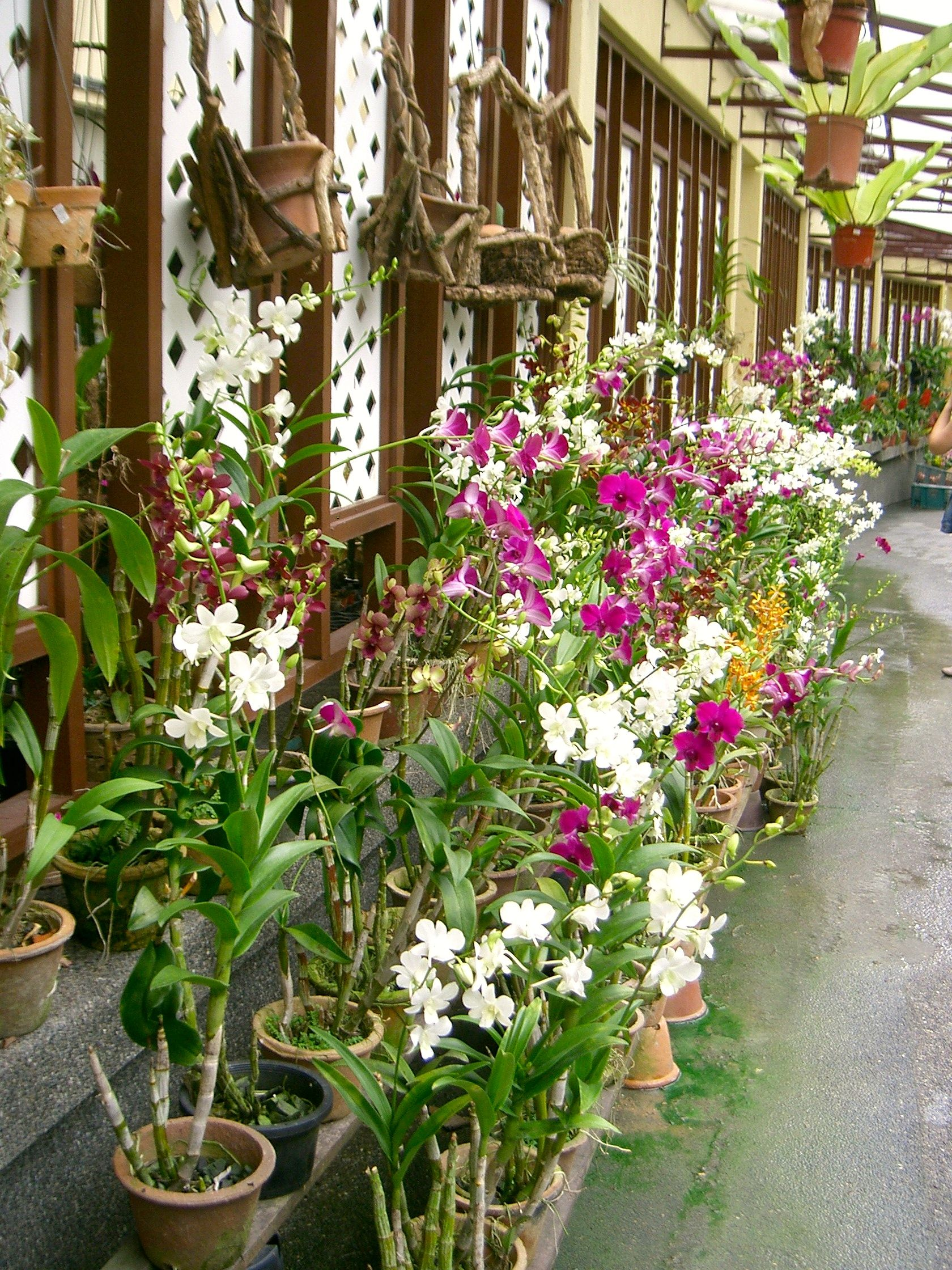 Flowers and Orchids at botanical garden Kuala Lumpur Malaysia