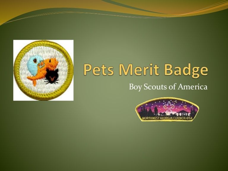 Remember To Use The Most Recent Pets Merit Badge Pamphlet