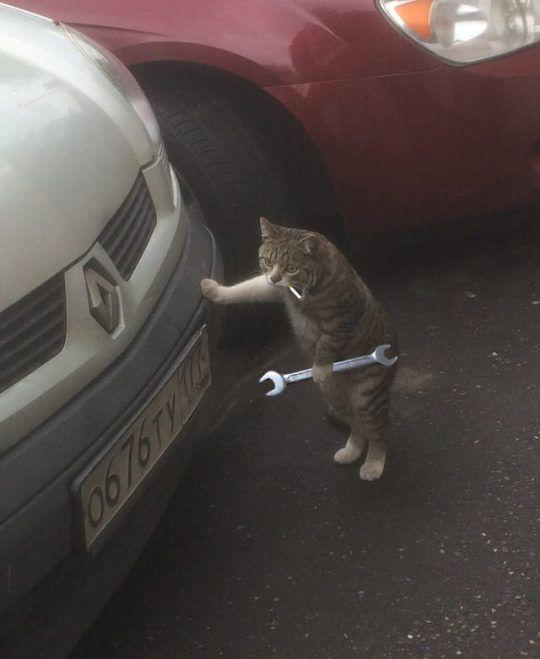 Gato Mecanico Cats Funny Cat Pictures Cat Pics