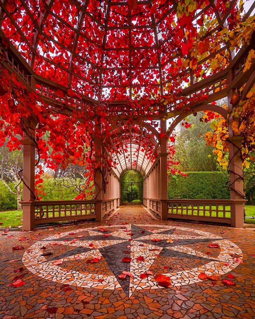 Beautiful autumn in Hamilton garden ,London 🇬🇧😍 Traveling ...
