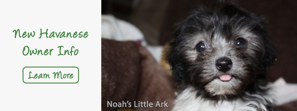 AKC Registered Havanese Breeders & Puppies for Sale