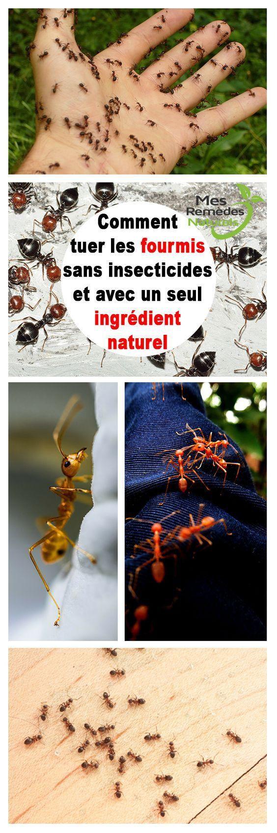 comment tuer les fourmis sans insecticides et avec un seul. Black Bedroom Furniture Sets. Home Design Ideas