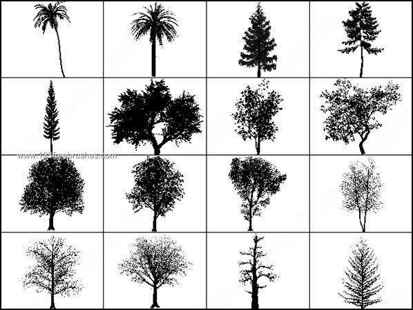 Free Photoshop Brushes Tree Https Www 123freebrushes Com Trees Nature Coco Tree Brush Tree Photoshop Photoshop Brushes Free Photoshop Brushes