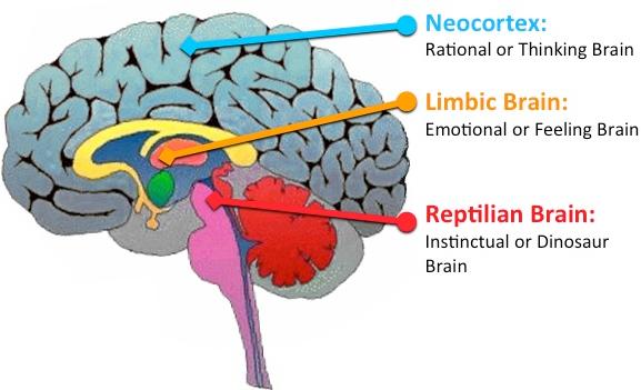 triune brain model - Google Search … | Reptilian brain