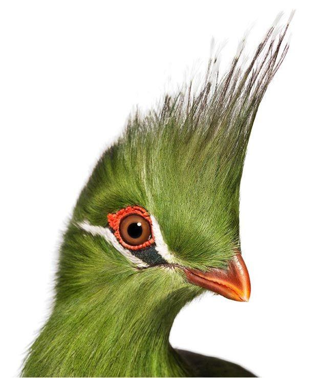 Andrew Zuckerman - Bird