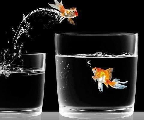 Goldfish Jumping Out If Glass Into A Glass With Another Goldfish Goldfish Love Wallpaper Color Splash
