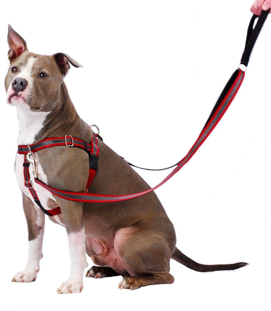 Reflective Red Freedom No Pull Dog Harness 2 Hounds Design Dog Harness Dog Weight Dog Pet Beds