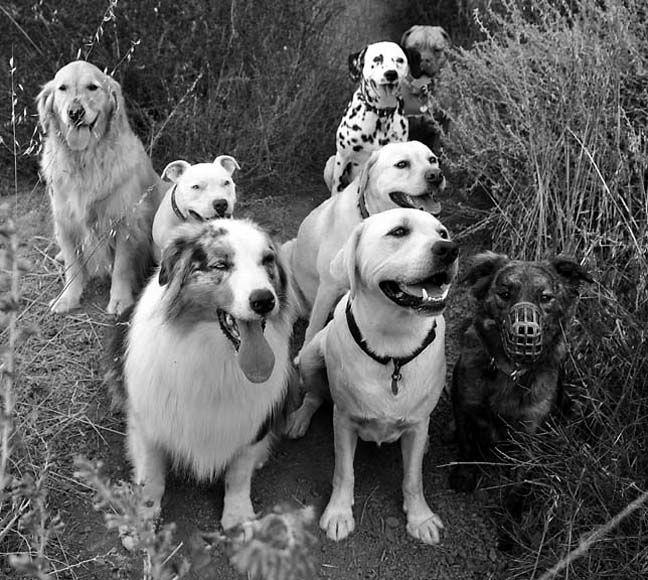 DogMa - contact: Gabriel (met at the dog park 11/03)