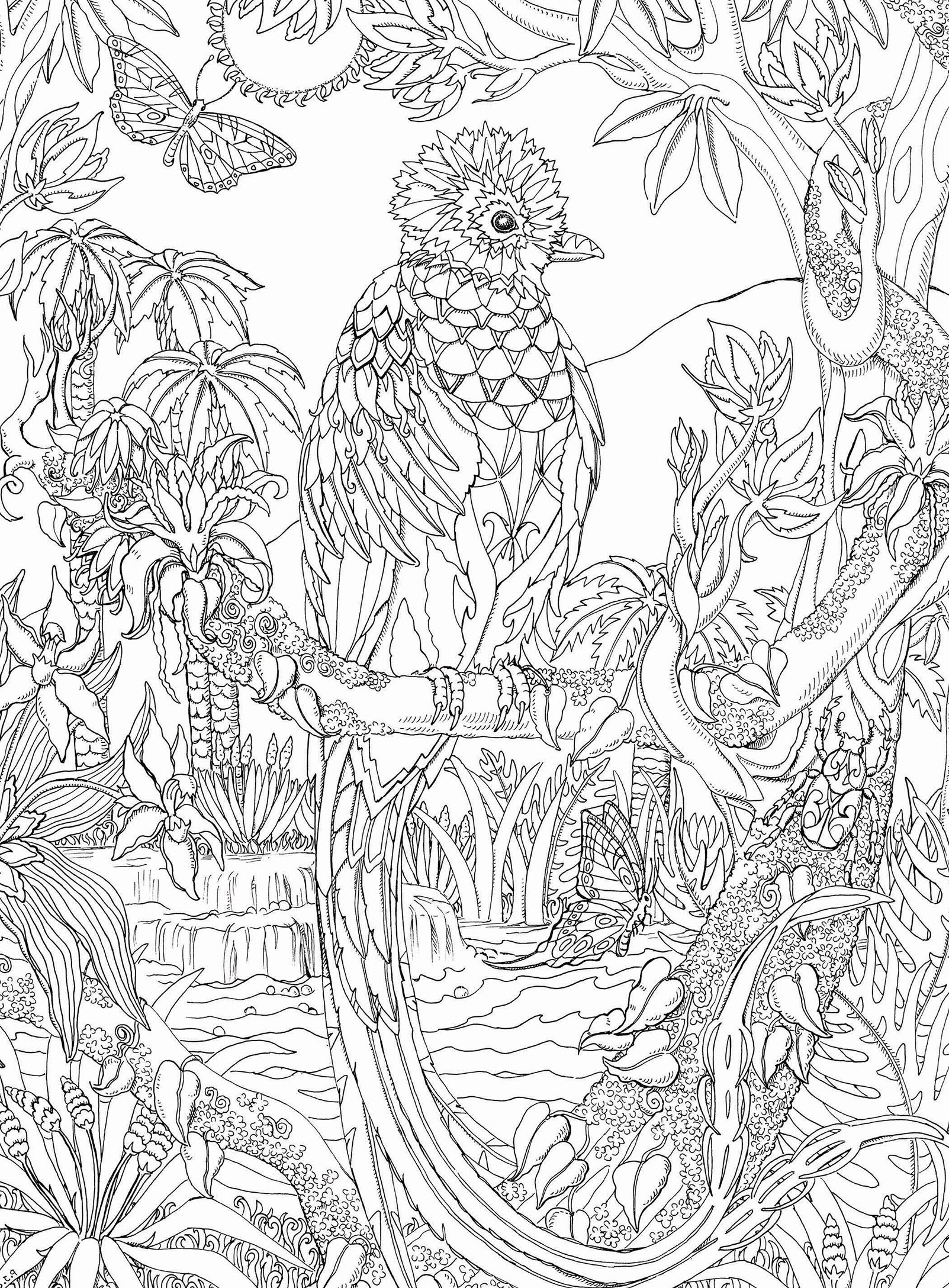 Pin By Barbara On Coloring Parrot Animal Coloring Pages Fairy Coloring Pages Mandala Coloring Pages