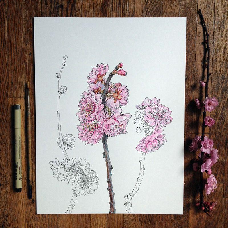 Flowers in Progress: Scientific Illustrator Taunts Us with Spring