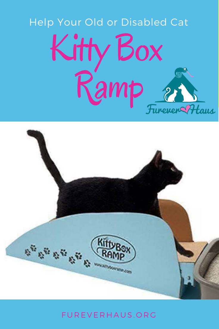 Kitty Box Ramp Help Your Old Or Disabled Kitty S Cat Training Litter Box Cat Training Senior Cat Care