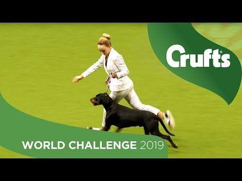 Eukanuba World Challenge Finals Opening Parade Crufts 2019