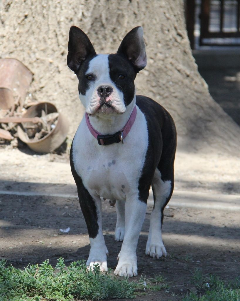 Adopt Wilma *Adoption in process* on Animal rescue, Dogs