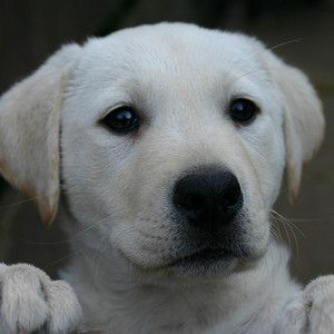 When To Start Training A Puppy What Age Can You Begin Dog
