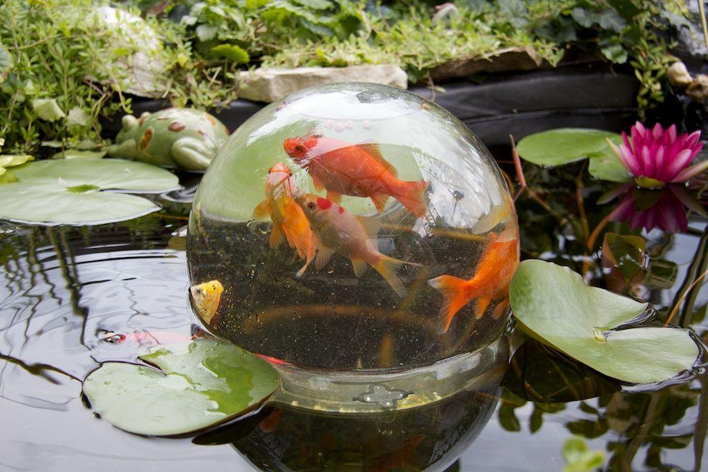 Bowl Pond Google Search Koi Pond Pinterest Bowls