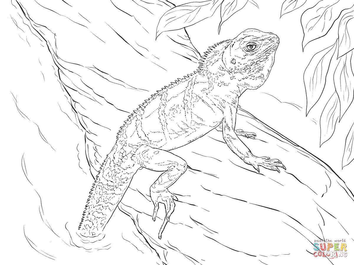 Realistic Chinese Water Dragon Coloring Pages Png 1200