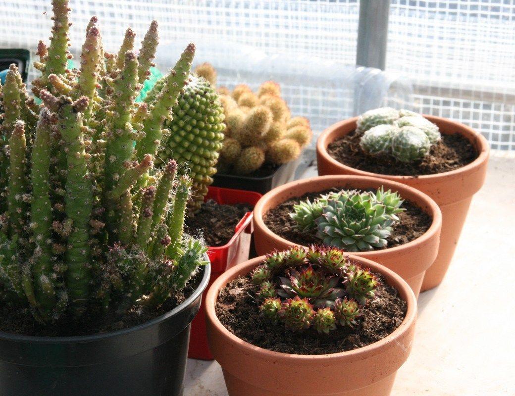 Comment Arroser Les Plantes Grasses Et Les Succulentes Plantes Grasses Succulentes Bouture Et Arroser Plante