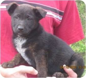 Adopt Cinna FOSTERED OFF PROPERTY on | I love Animals