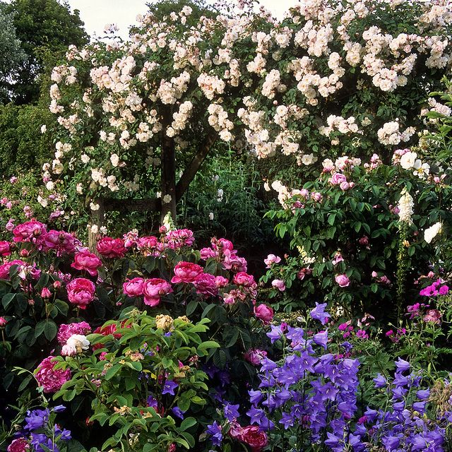 Mottisfont Abbey Rose Gardens Romsey Hampshire Uk An Outstanding National Trust Rose Garden 11 Of 20 Rose Covered Rustic Arch Beautiful Gardens English Garden Design English Country Gardens