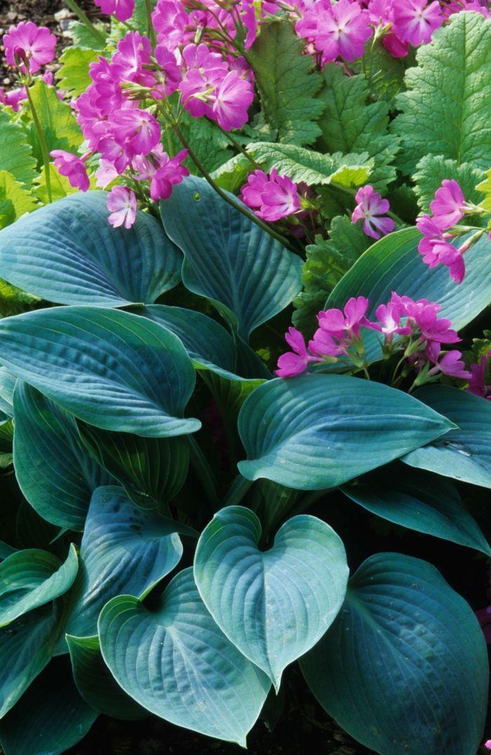 Farbenfrohe Schattenpflanzen für Ihren Garten