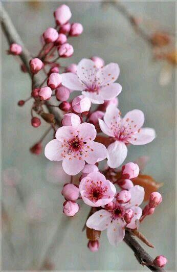 Four Seasons Collage Spring Summer Autumn Winter Cherry Tree Cherry Blossom Festival Japanese Cherry Tree