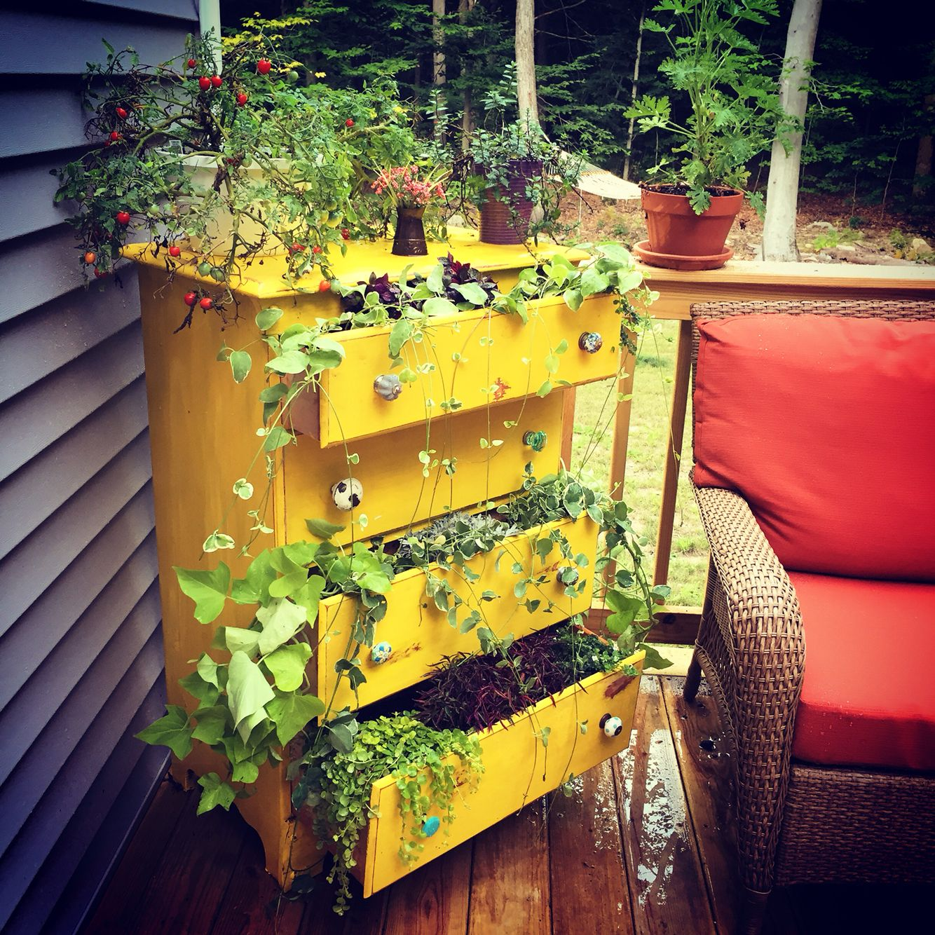 Creative Screened Porch Design Ideas: Refinished And Repurposed Dresser Made Into A Planter For