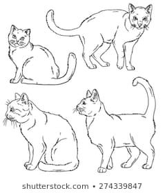 cat outline images stock photos  vectors  shutterstock