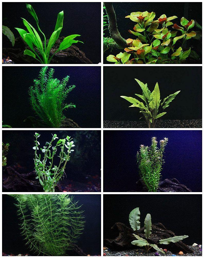 Live Aquarium Plants Package - 8 Easy Aquatic Species ...