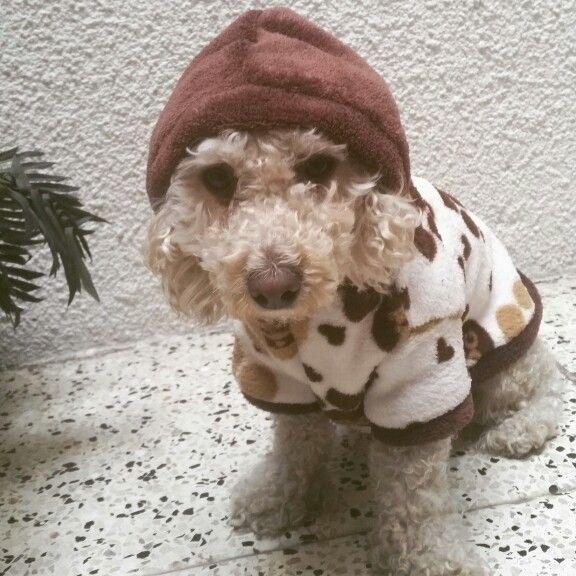 #perro#mascotas